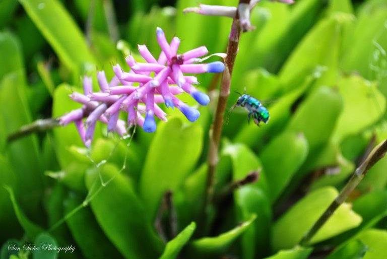 cbug incomng