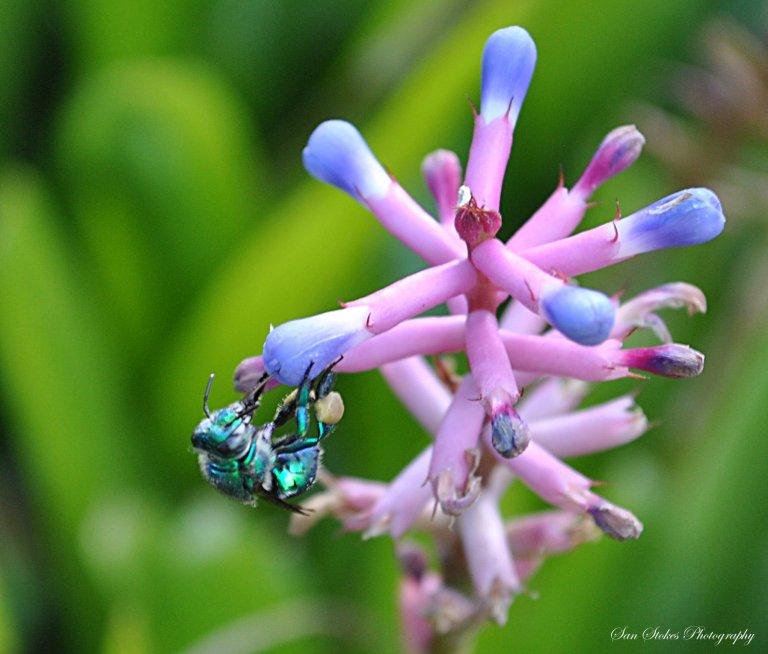 cbug landing