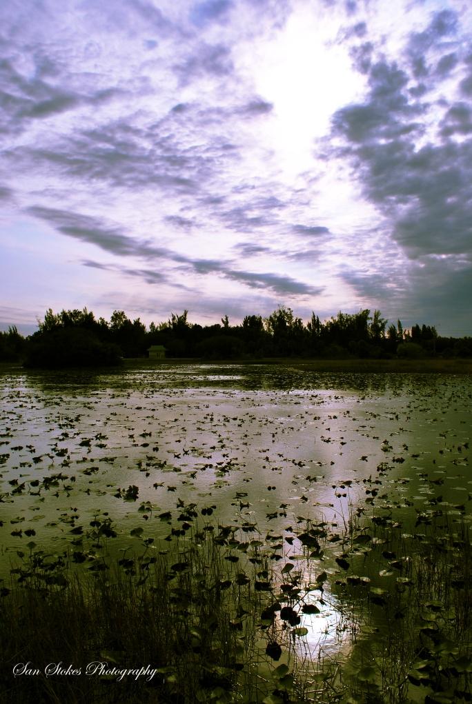 cswamp house