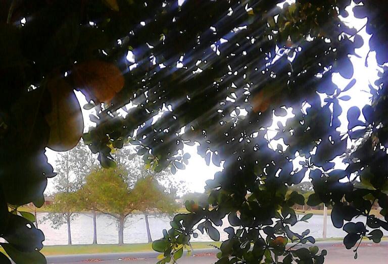 Bneath the leaves