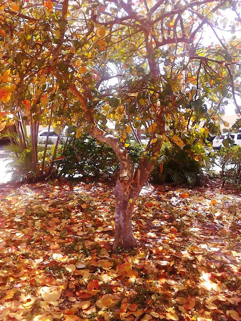 tree of autumn