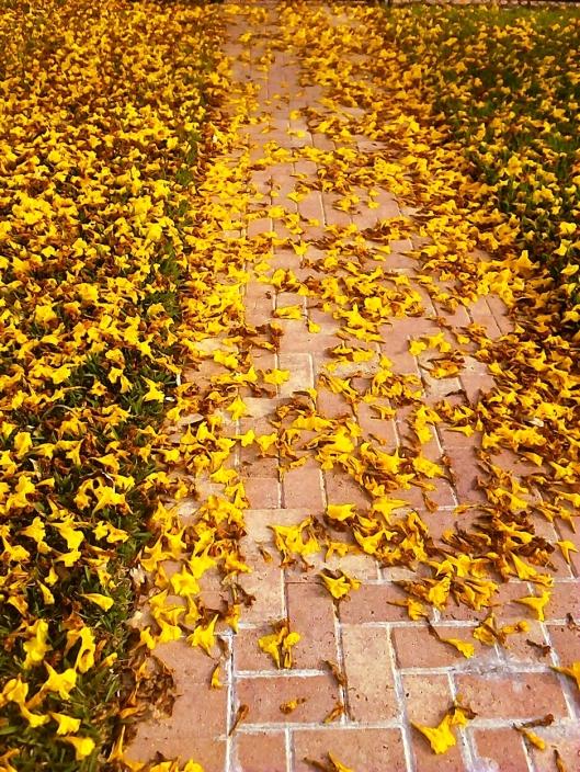 Yellow flwr road