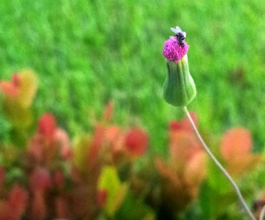 fly hump