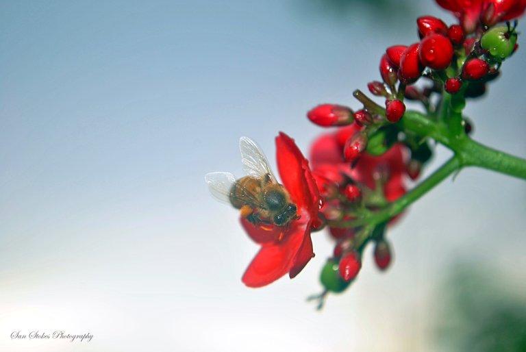 crain drops bee
