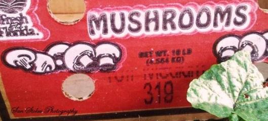 cmush box
