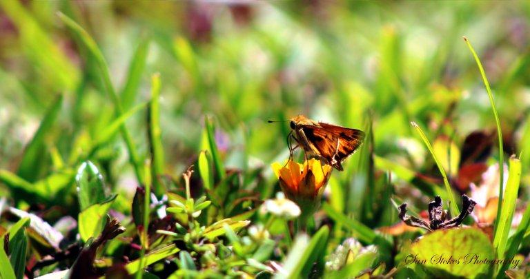 orange.ssp