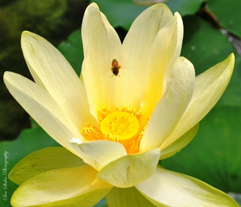 cbee and flower