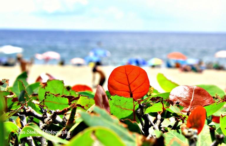 beach scenessp